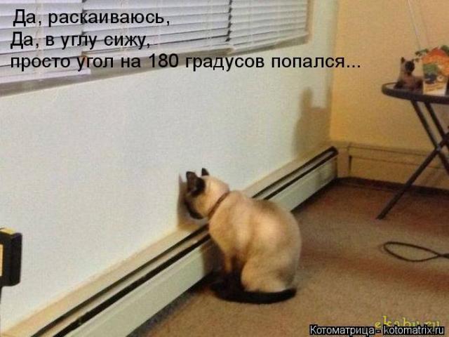 kotomatritsa_1x.jpg